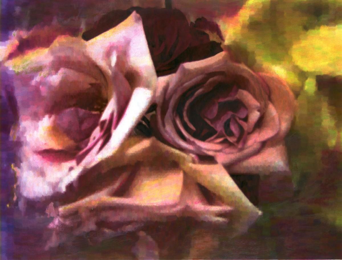 Soft Petaled Roses